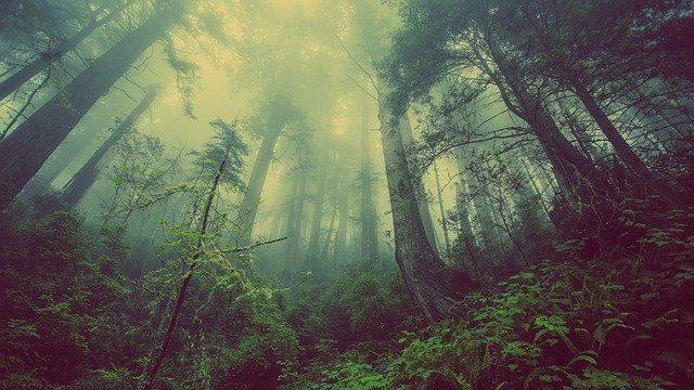 Une forêt plein d'arbres.