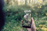 Google veut sauver les espèces animales menacées